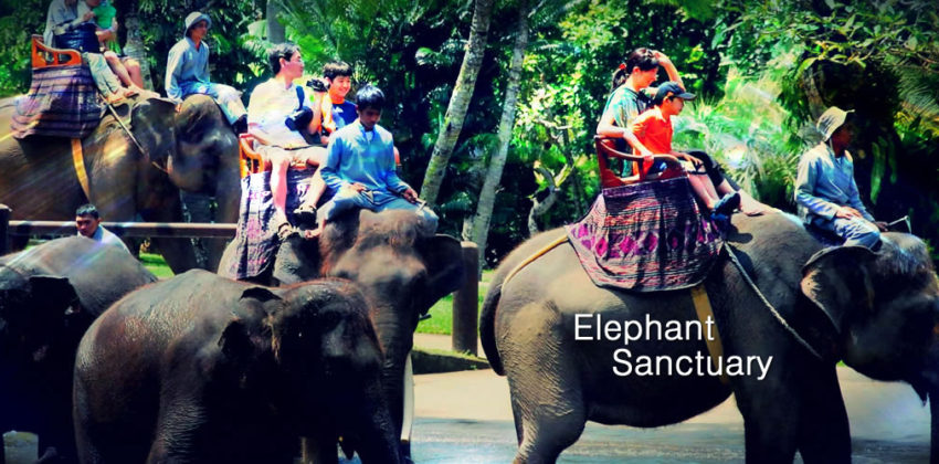 Elephant Sanctuary Day Tour