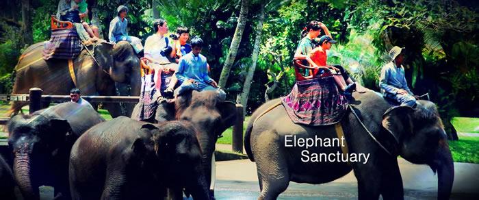 Elephant at Kuala Gandah